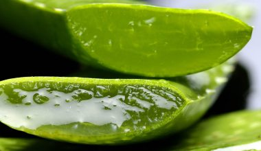 Aloe vera which you can use to soothe your razor burn